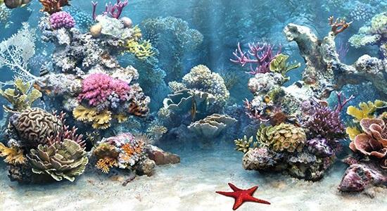 sea_fish