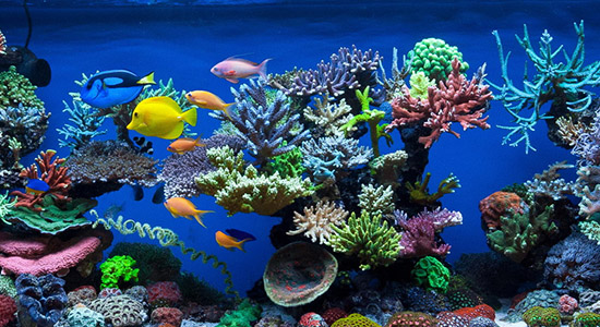 color_fish