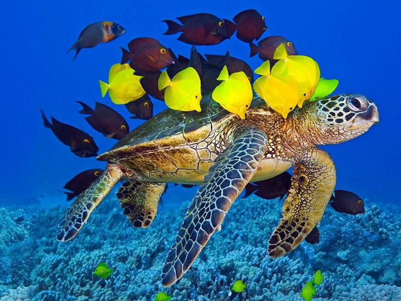 Интересно о морских черепахах