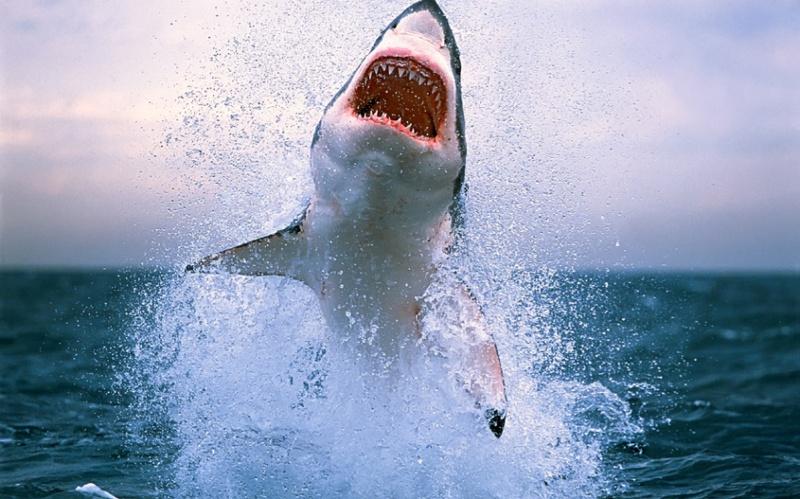 Опасные обитатели Мирового океана
