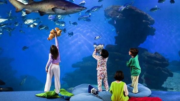 Куда пойти в Севастополе любителям морской флоры и фауны?