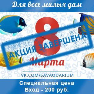 Акция в честь 8 марта! Стоимость входного билета для девушек - 200 руб.