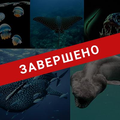 Опасные животные мирового океана (Завершено)