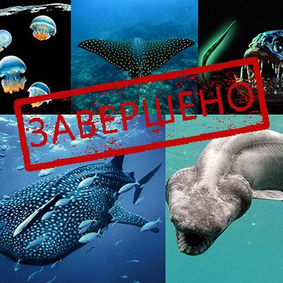 Опасные животные мирового океана — 2 июля в 16-00