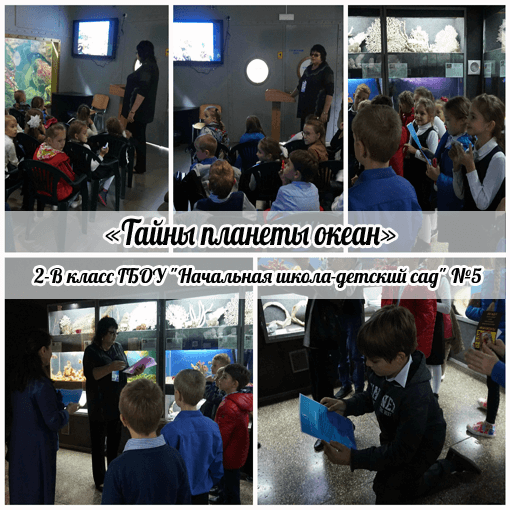 В Севастопольском Аквариуме стартовал проект «Тайны планеты Океан