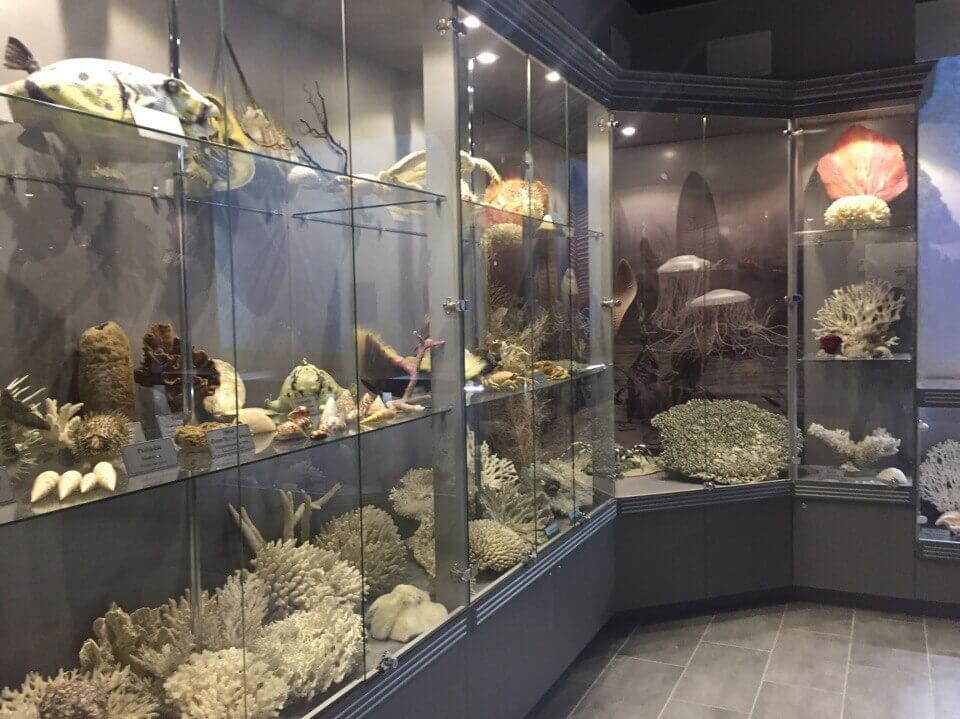 В канун Нового года была открыта экспозиция 1-ого зала Аквариума