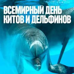 Всемирный день китов и дельфинов!