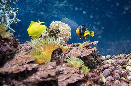 01 Коралловый риф 450