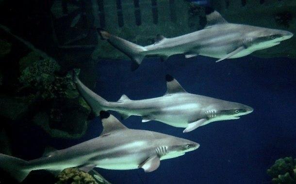 Акулы. В Севастопольском морском Аквариуме-музее пополнение!!!
